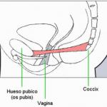 Ejercicio para aprender a tonificar y relajar la vagina