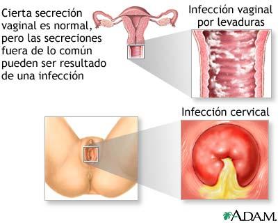 Sexo Vaginal - Videos Porno Gratis de Sexo Vaginal